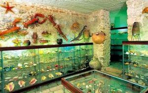 museum-shells